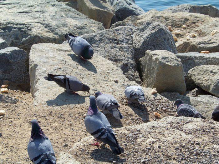 Verschnürte Taubenfüße