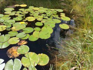 Biotop für einen wildtierfreundlichen Garten