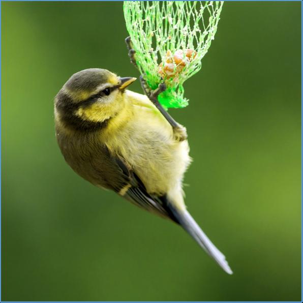 Tafelnde Gartengäste: Von Sinn und Unsinn der Ganzjahresfütterung
