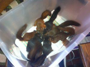 Eichhörnchenbabys