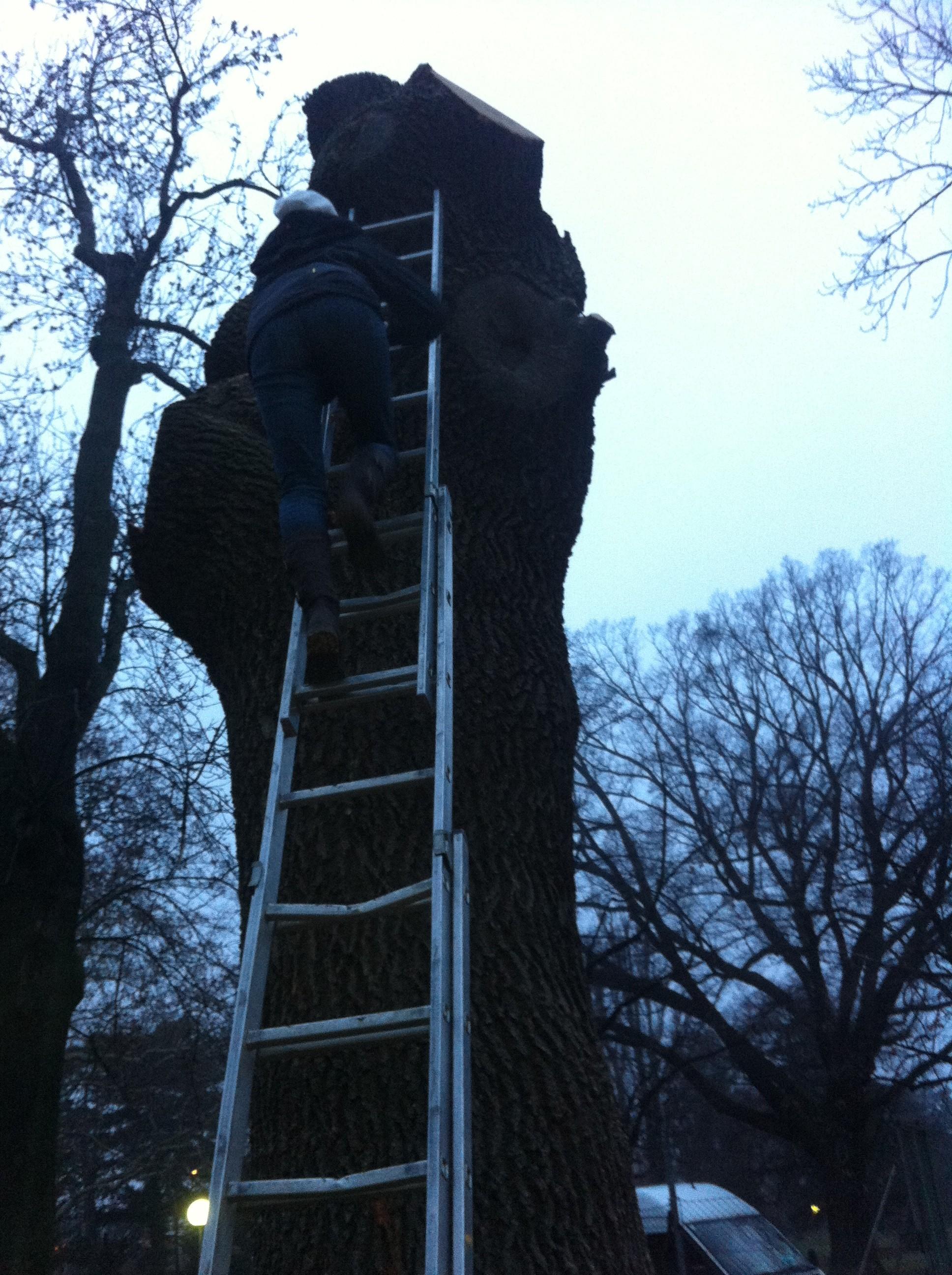 Untersuchung des Baumes