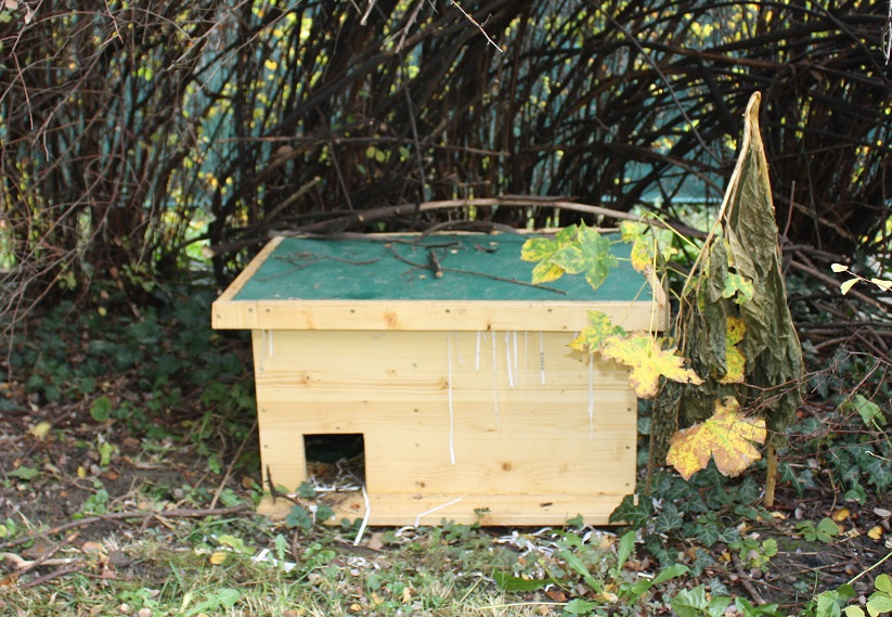 Top Igelauswilderung Tipps und Tricks - Wildtierhilfe Wien #VB_52