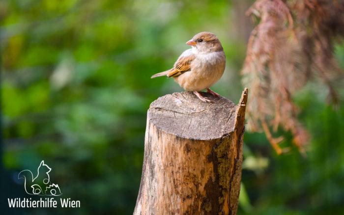 Glaskollisionen bei Vögeln
