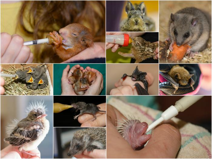Wildtierauffangstation - Wildtierhilfe Wien Collage