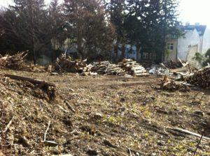 Waldrodung in Hernals. Innerhalb von zwei Tagen war das Waldstück entfernt.