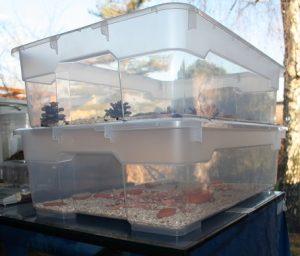 Die Zuchtboxen: Oben sind die erwachsenen Käfer unterwegs, unten befindet sich die Babybox, in der die Junglarven leben,