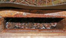 Ersatzquartiere für Fledermäuse